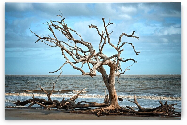 Driftwood Beach Lone Tree by Bill Swartwout Photography