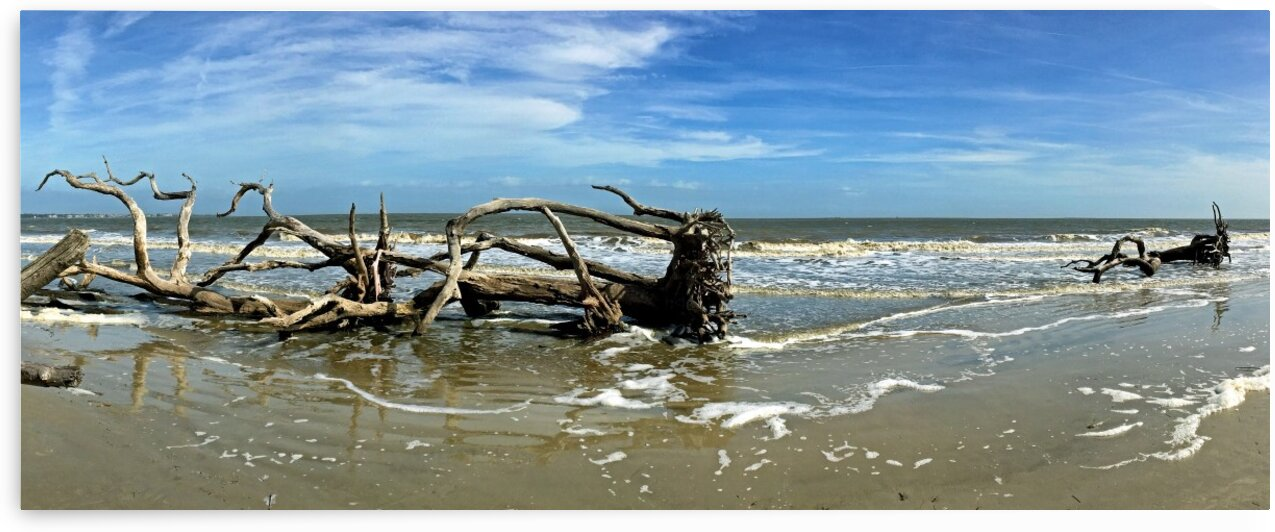 Driftwood Beach Panorama 103 by Bill Swartwout Photography