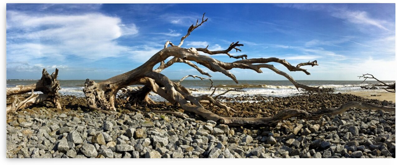 Driftwood Beach Panorama 101 by Bill Swartwout Photography