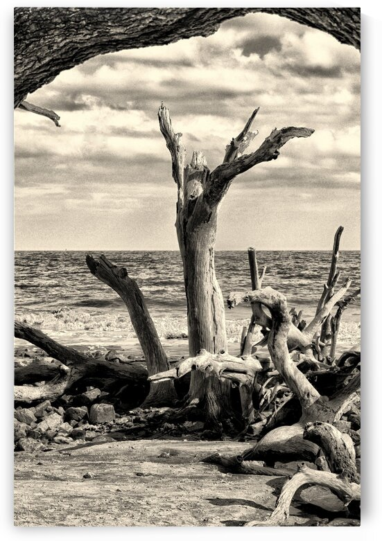 Driftwood Beach Uplifting Black and White by Bill Swartwout Photography