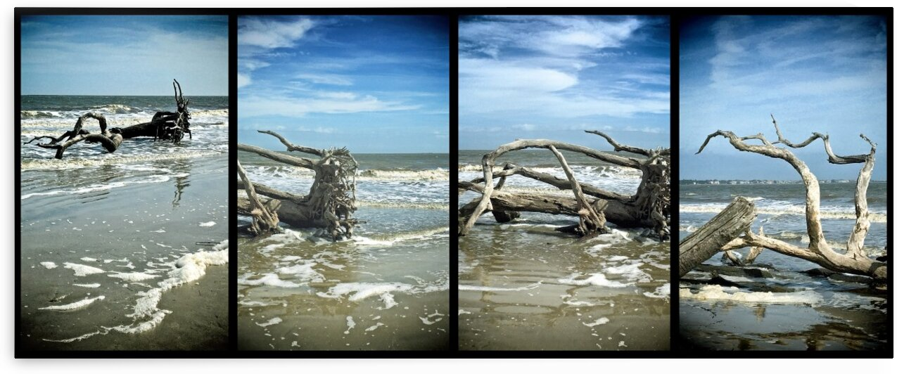 Driftwood Beach Panorama Quadtych by Bill Swartwout Photography