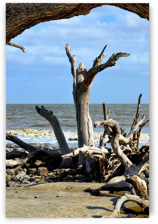 Driftwood Beach Uplifting by Bill Swartwout Photography