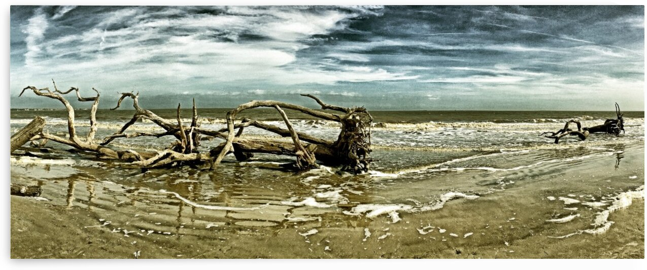 Driftwood Beach Panorama 103 Blackgold by Bill Swartwout Photography