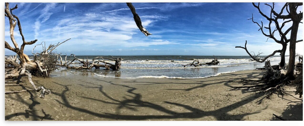 Driftwood Beach Panorama Shadows by Bill Swartwout Photography