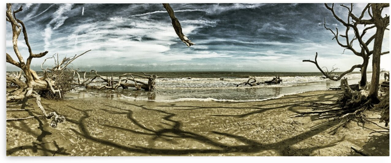 Driftwood Beach Panorama Shadows Blackgold by Bill Swartwout Photography