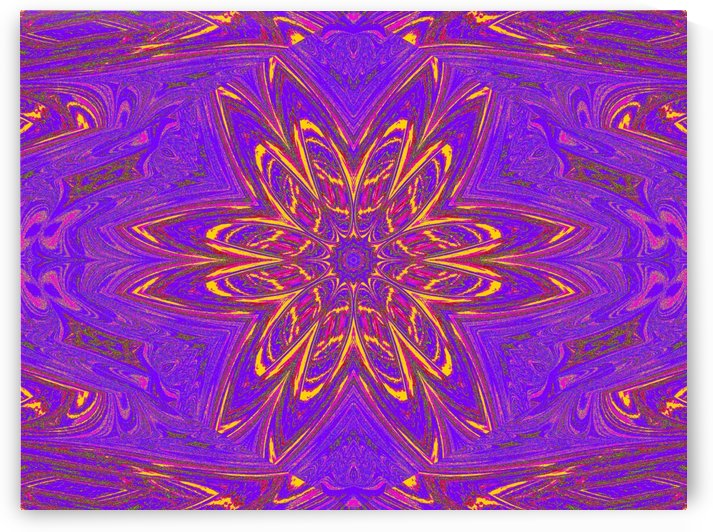 Orange Purple Daisy by Sherrie Larch