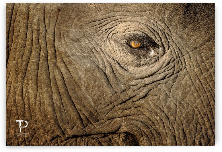 An Elephant Tear by Thierry Prieur Photographie
