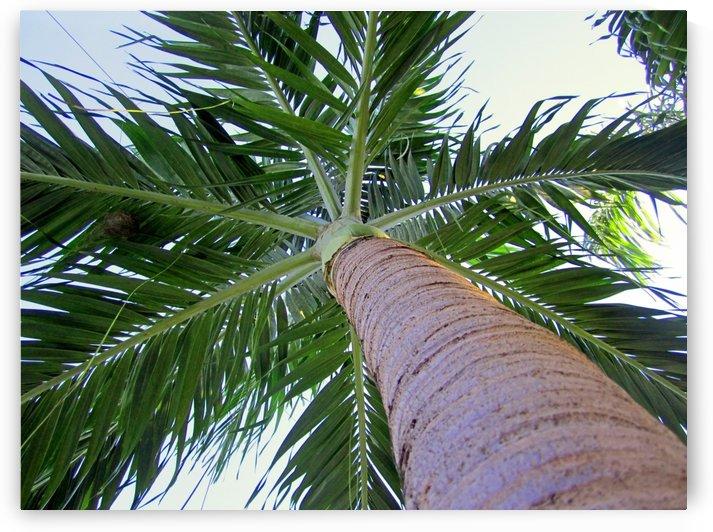 Under a Palm Tree by Gods Eye Candy