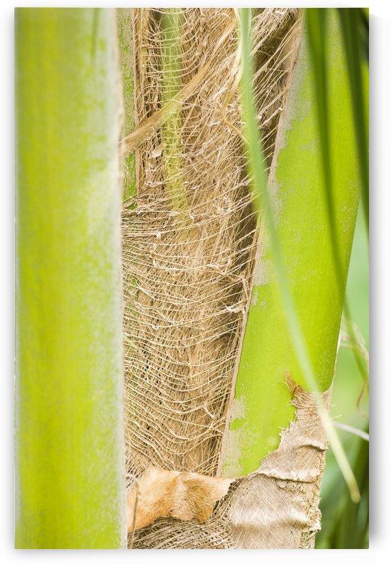 Coconut Husk by Ian Barr