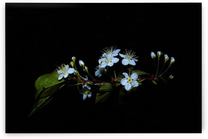 Apesanteur by Annie St-Pierre Photographie