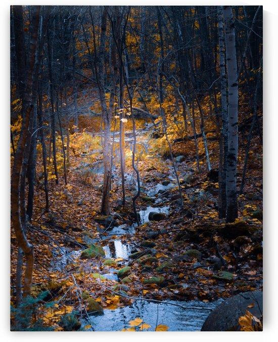 Ruisseau by Annie St-Pierre Photographie