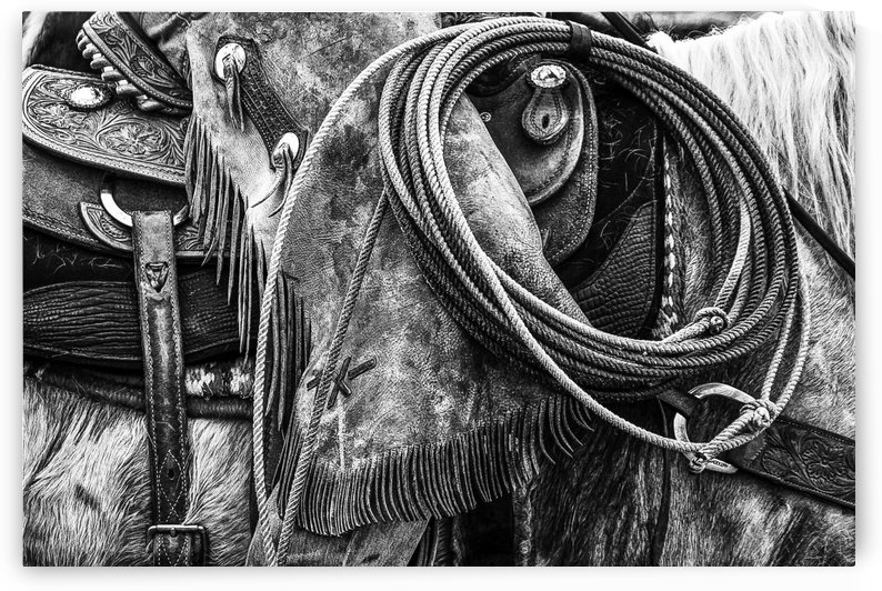Tools of the Trade - Black and White by Diane Mintle