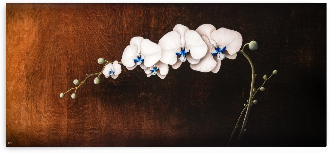 Orchids and Moonlight by Kos Art