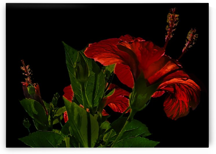 High Contrast Hibiscus Flower Photo Illustration by Daniel Ferreia Leites Ciccarino