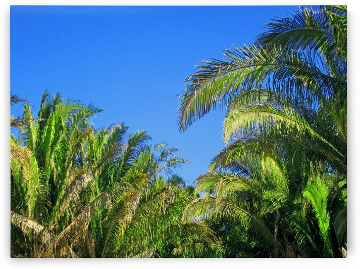 Palm Trees and Clear Skies by Gods Eye Candy