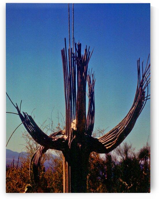 Saguaro Cactus Skeleton by ImagesAsArt By John Louis Benzin
