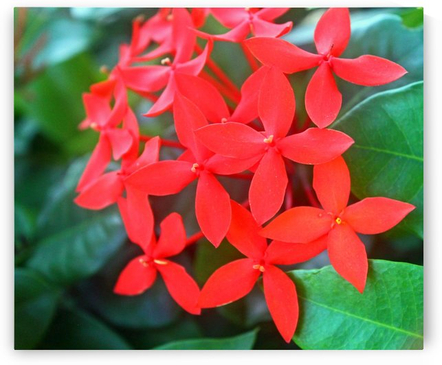 Vibrant Red by Gods Eye Candy