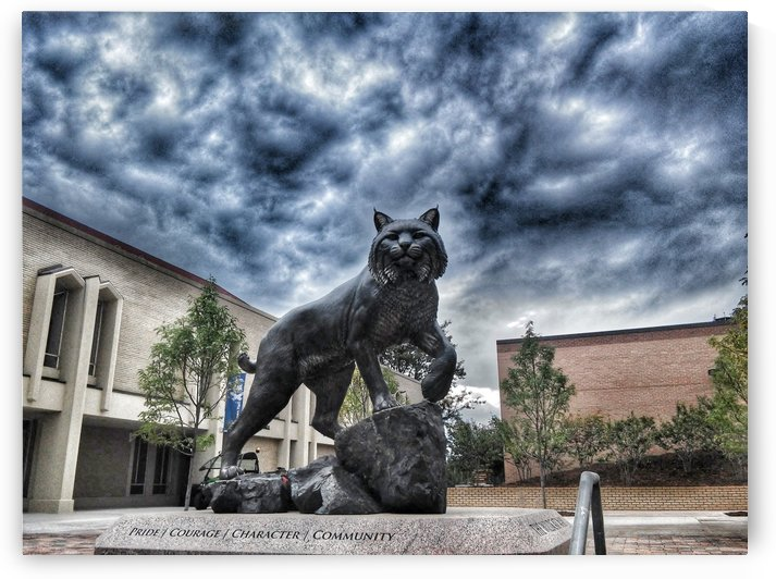JWU Wildcat Denver by Phoenix Down