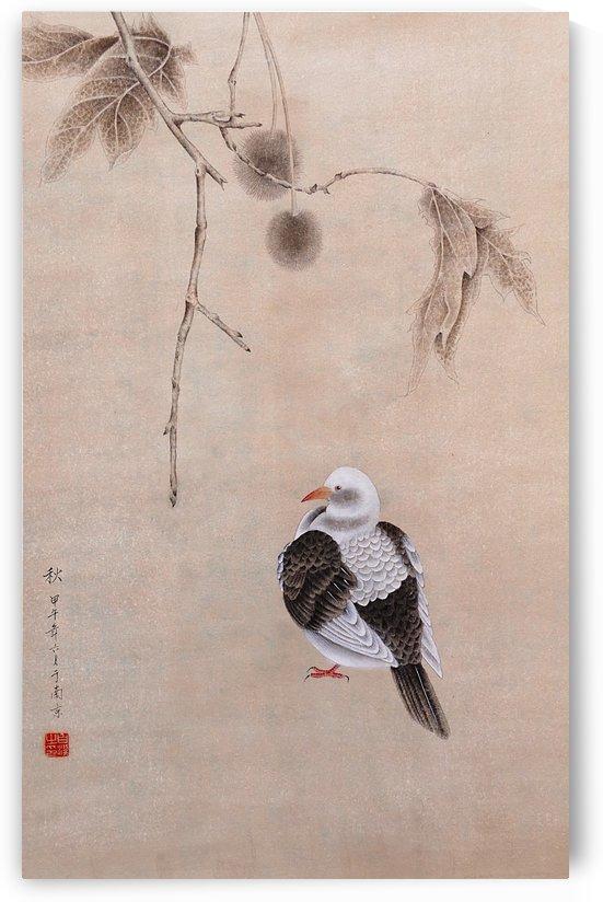 Pigeon by Birgit Moldenhauer