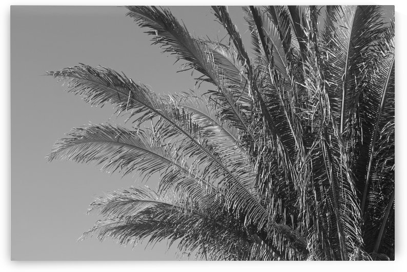 Tropical Leafs B&W by Gods Eye Candy