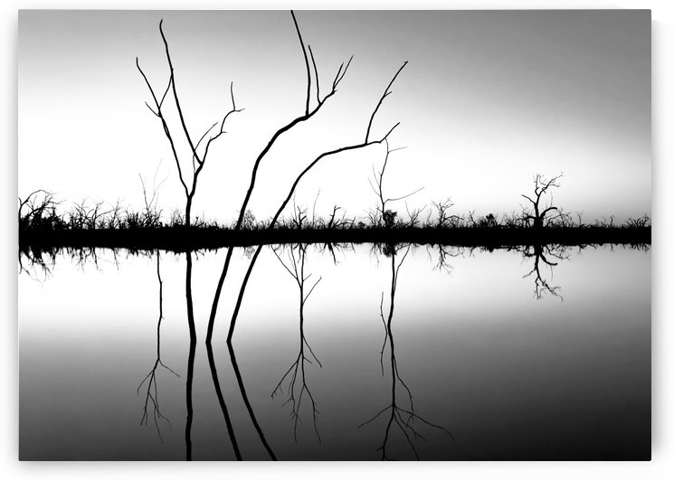 Reflections on Pamamaroo Lake in B&W by Lexa Harpell