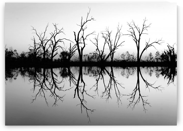 Tree Skeleton Silhouettes in B&W by Lexa Harpell