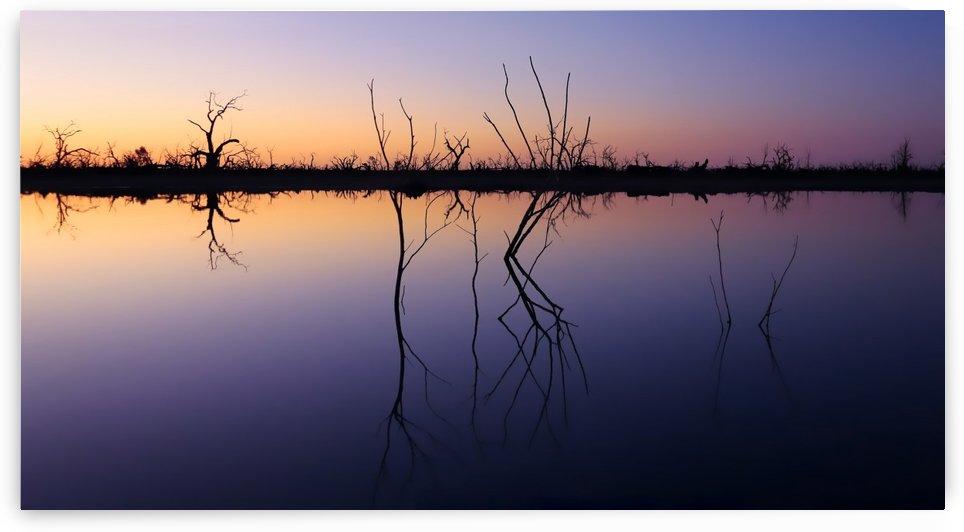 Moonlight on Pamamaroo Lake by Lexa Harpell