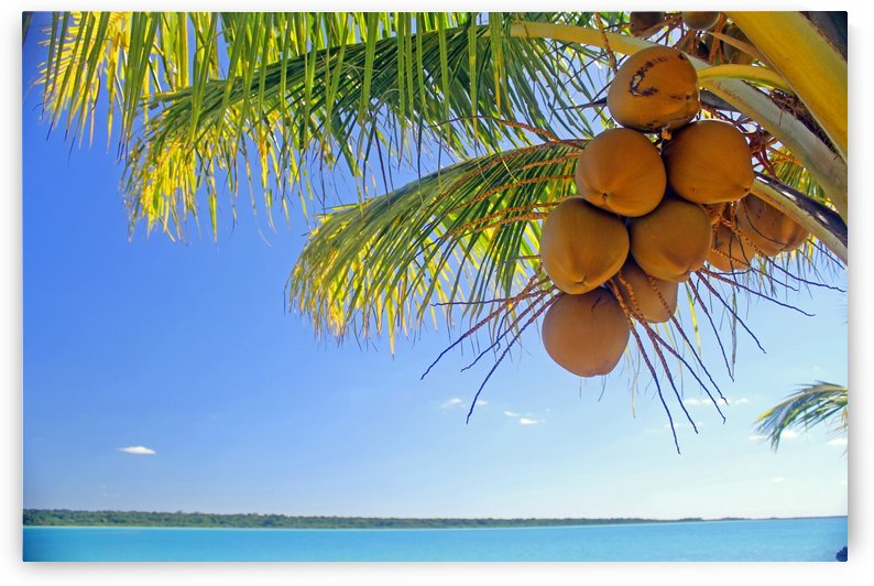 Lively Coconuts by Gods Eye Candy