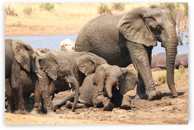 Elephants in Pilanesberg 2639 by Thula-Photography