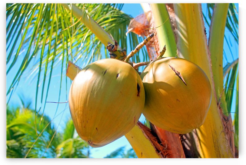 Tropical Coconuts by Gods Eye Candy