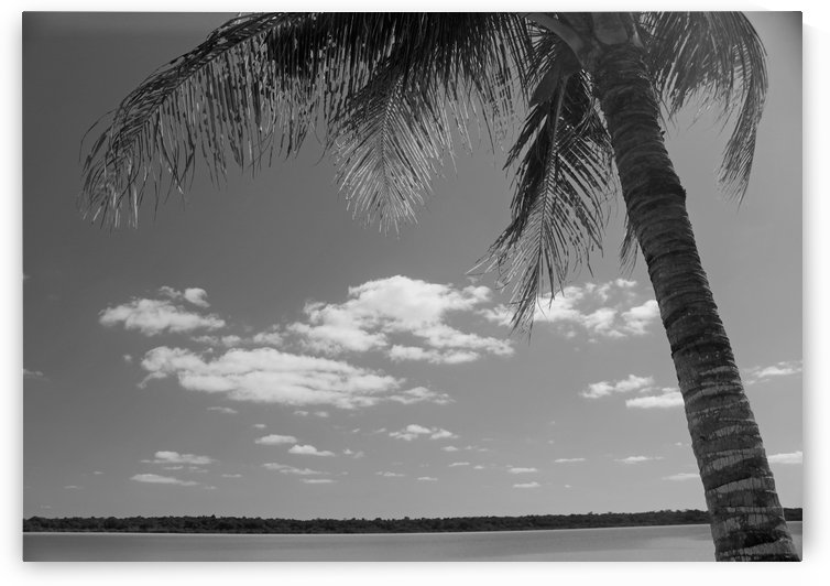 Peace in Costa Maya Mexico B&W by Gods Eye Candy