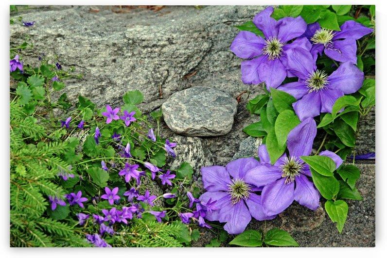 Purple On The Rocks by Deb Oppermann