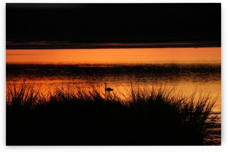 Sunset_Shadow by Julie Allan-Stark