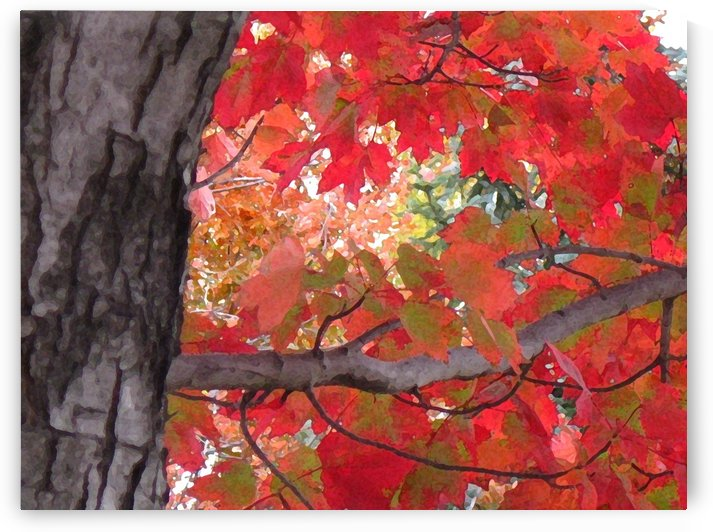 Fall Leaves Art Photograph by Katherine Lindsey Photography