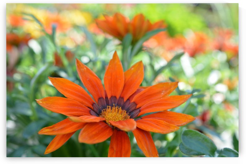 Orange Floral Photography  by Katherine Lindsey Photography