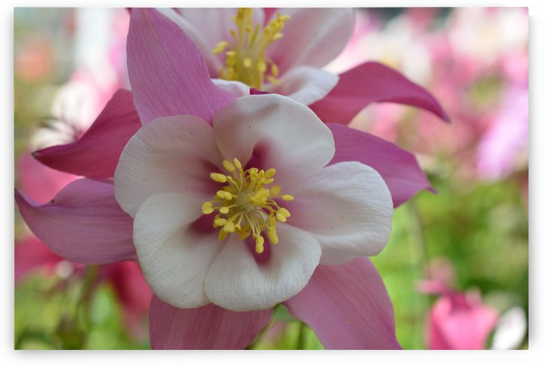 Floral Pink Photography by Katherine Lindsey Photography