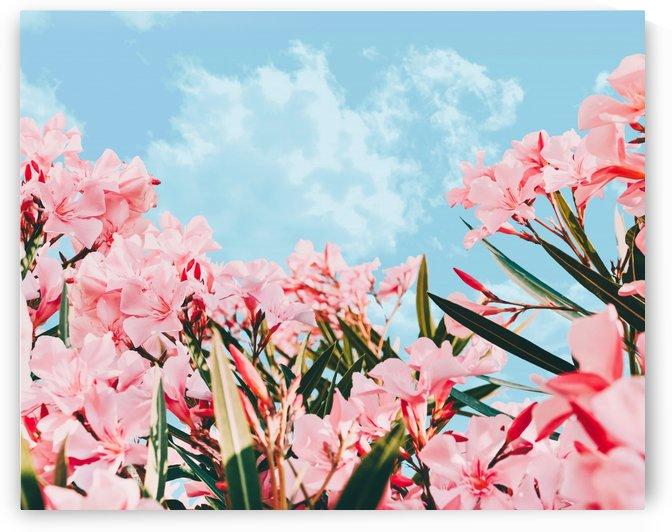 Blush Blossom II by 83 Oranges