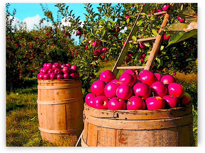 Orchard by W Scott