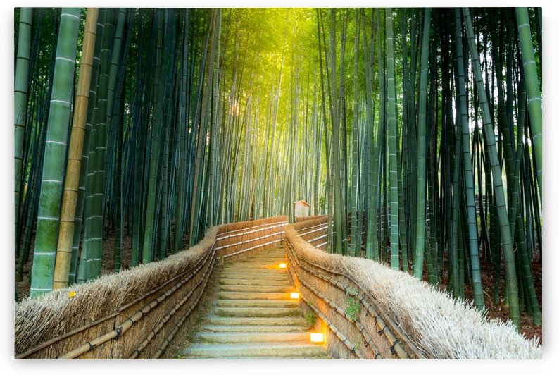 Bamboo forest in Kyoto by CyclopsfromHungary