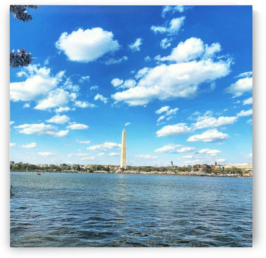 Tidal Basin Cherry Blossoms by AEDIFICO Prints