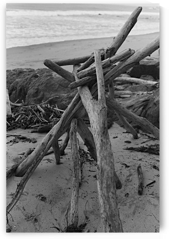 Driftwood Art by H.Hart Photography