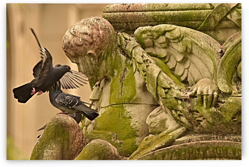Bird and Moss by H.Hart Photography