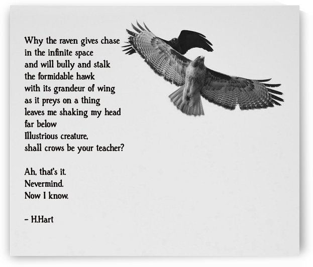 Hawk and Raven Poem by H.Hart Photography