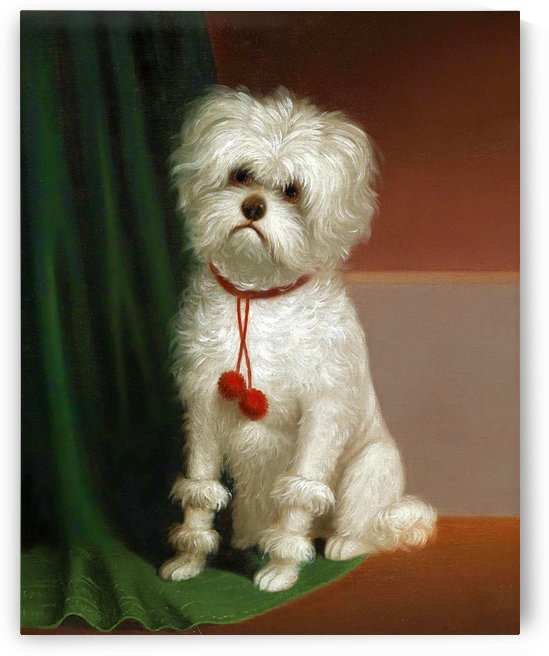 A White Dog_OSG by One Simple Gallery