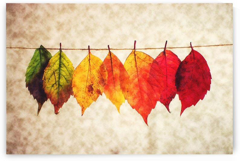 Color of Fall by Erin Mac
