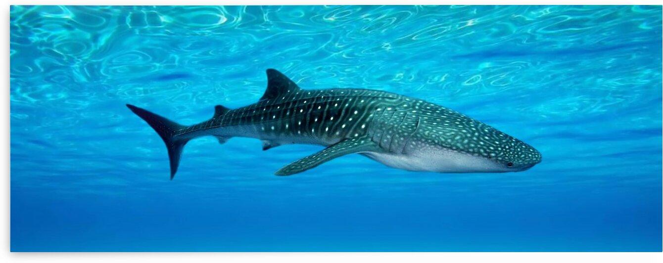 Tiger shark. Sea creatures. Fish. by Radiy Bohem