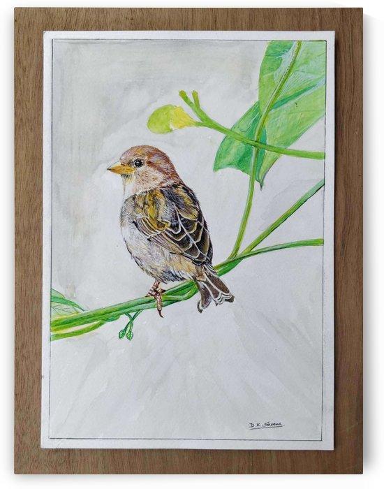 Sparrow_DKS by D K Saxena
