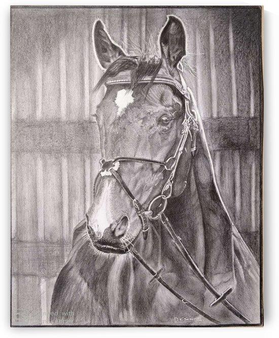 Horse_DKS by D K Saxena