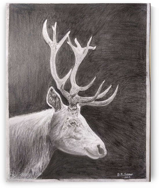 Stag_DKS by D K Saxena