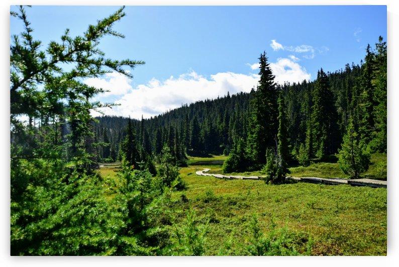 Mt Washington BC by Stuart Spofford